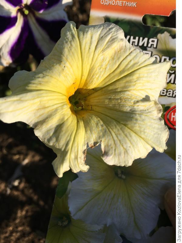 Повреждаемость цветков