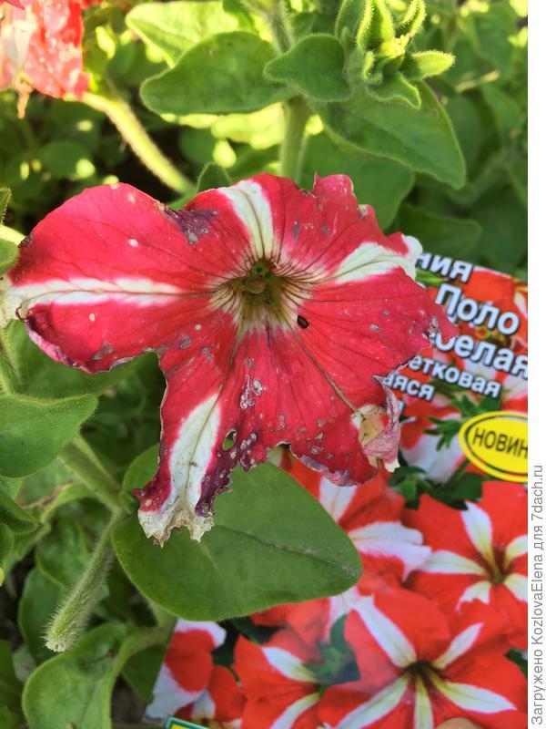 Повреждения цветков