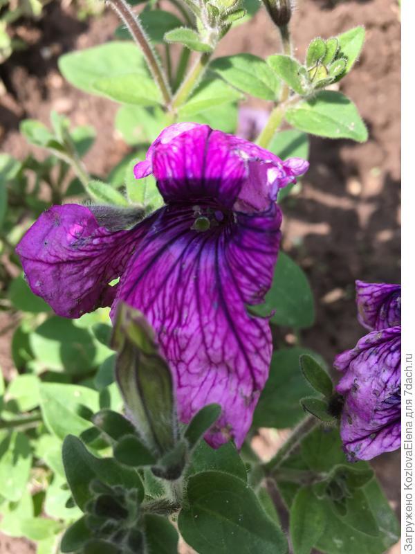 Поврежденные цветки
