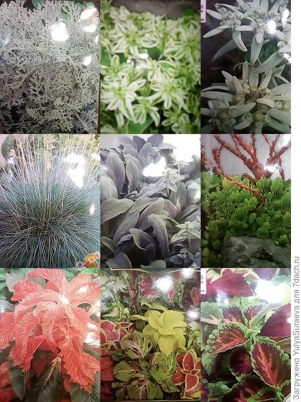 Коллаж из фото на пакетиках семян