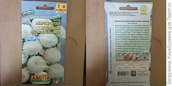 Белые маргаритки