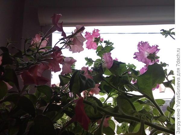 Джунгли на окне