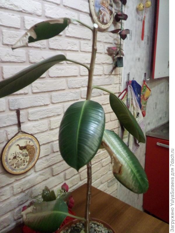 Часть растения