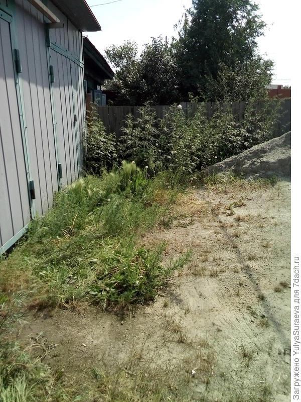 Заросли - участок 1 (разновидности крапивы, чистотела)