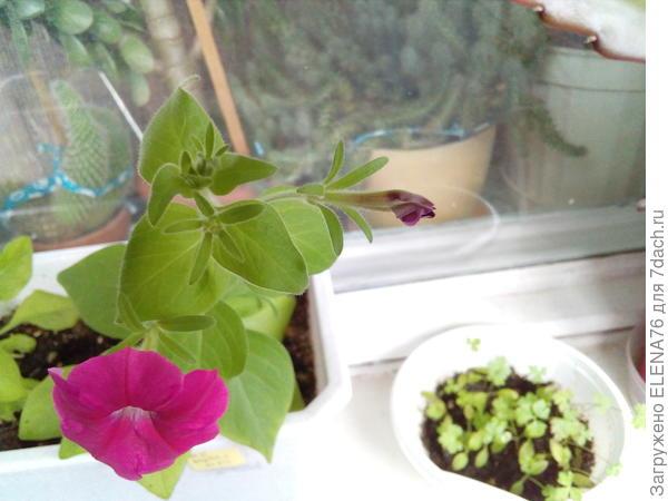 09.05 цветок уже раскрылся