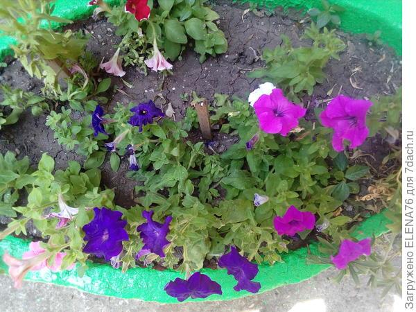 26.06 цветение в вазоне