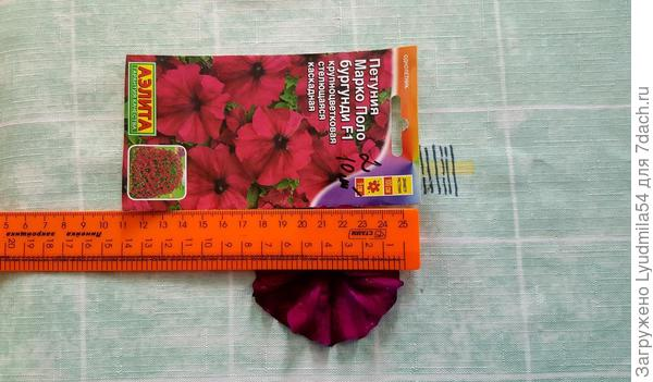 диаметр цветка