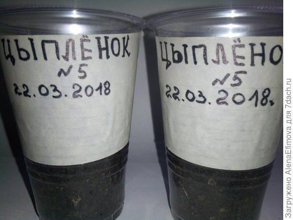 Подписанные стаканчики