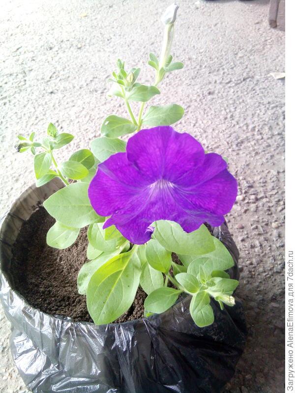 Цветёт