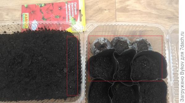 Высеянные семена