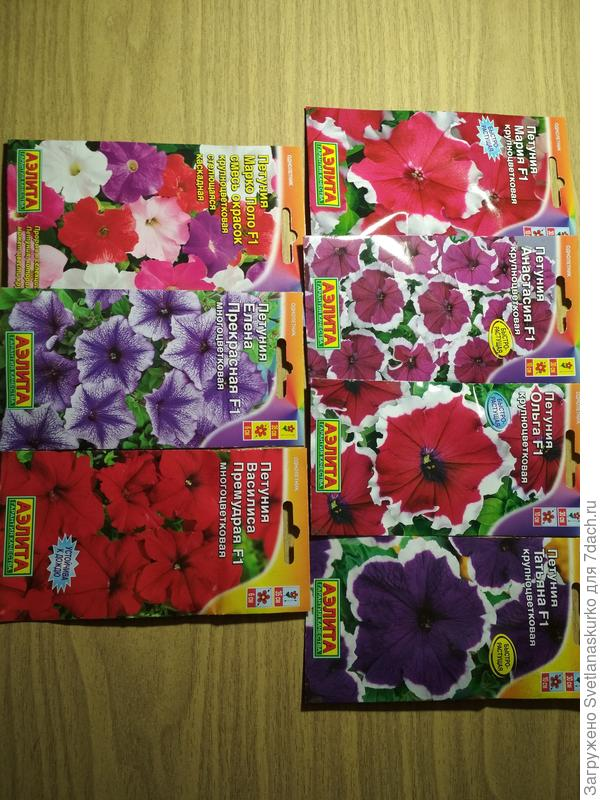 Крупноцветковая и многоцветковая петунии