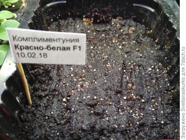 Контейнер с тестируемыми семенами