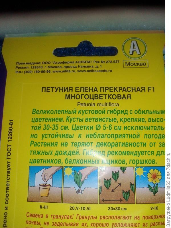 Петуния Елена ПрекраснаяF1