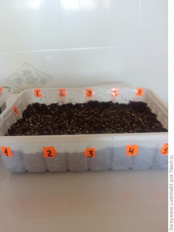 Посев гранул в грунт