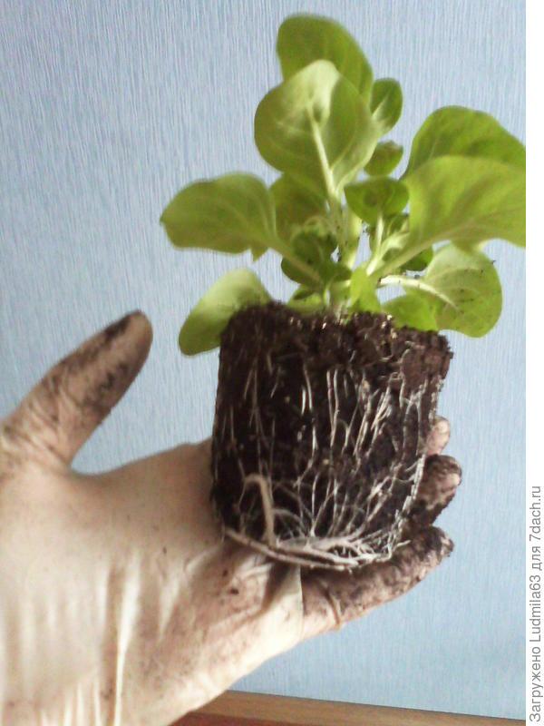 Показ корней