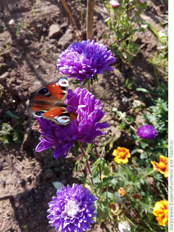 особенно ничего не фотографировали... Растёт, цветёт - хорошо!