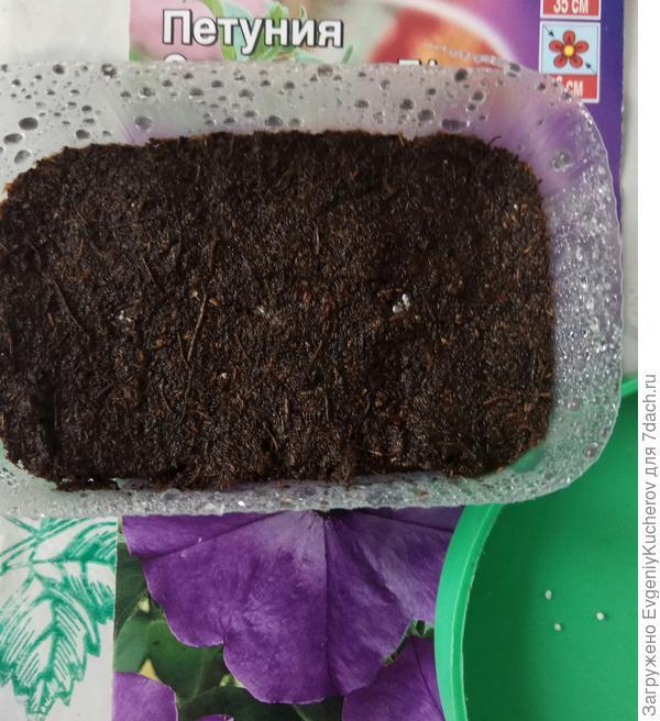 Переношу семена на поверхность почвы