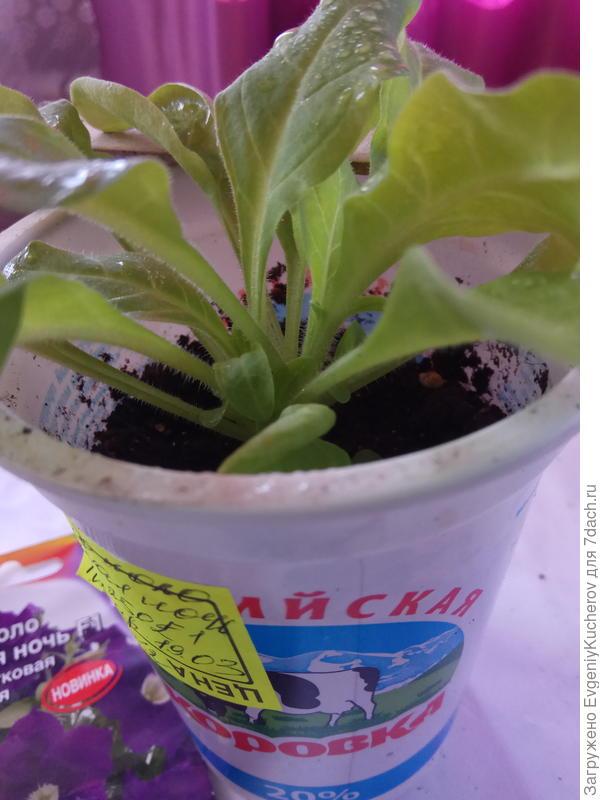 растение2