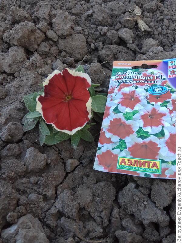 28 мая растение 4