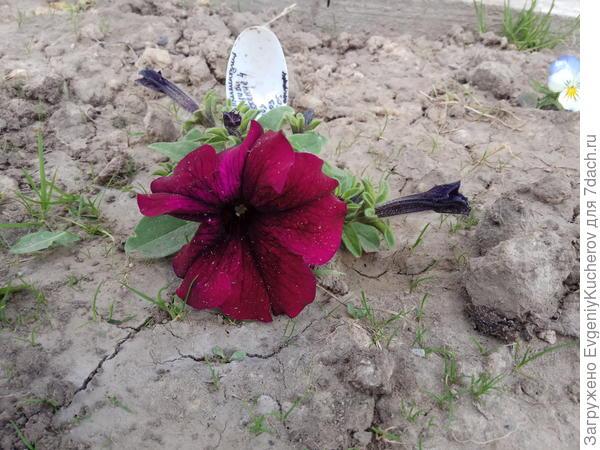 3 июня растение 4
