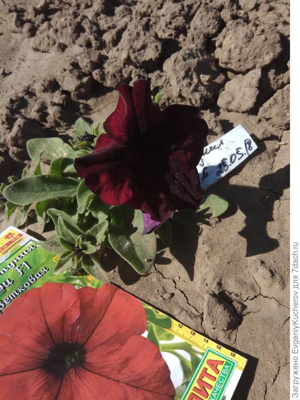2 июня растение6