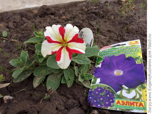 13 июня растение 3