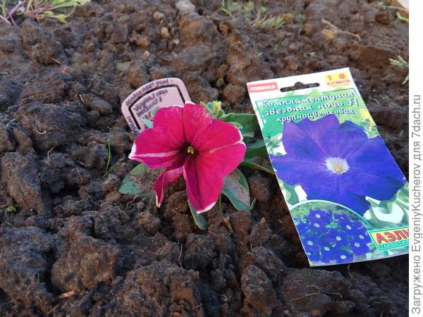 9 июня растение  4