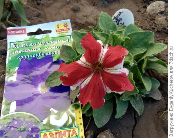 17 июня растение 2