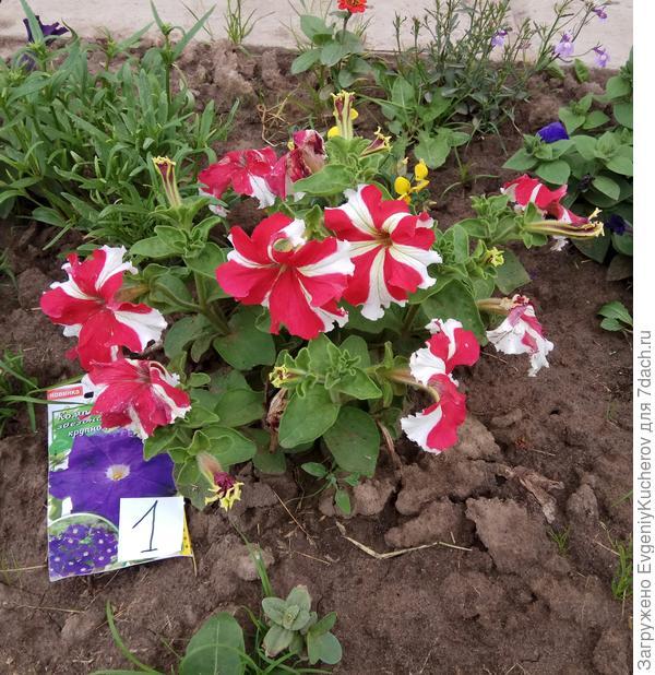 растение1