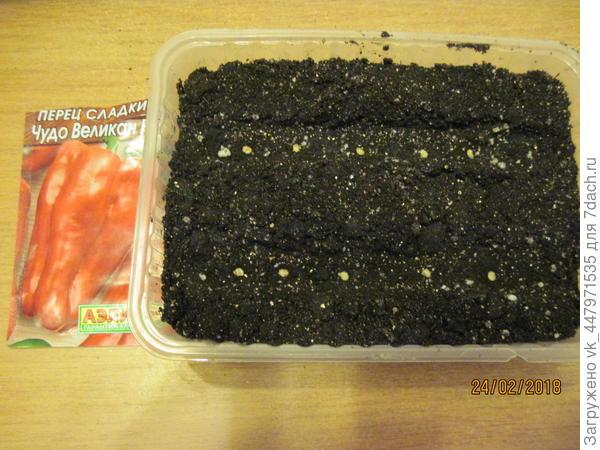 посадила семена в грунт