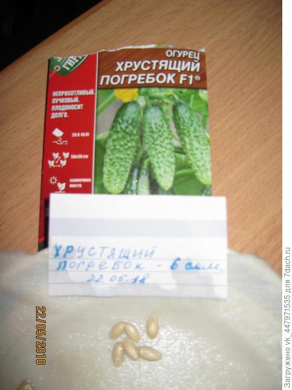 Замачила семян в растворе НВ 101