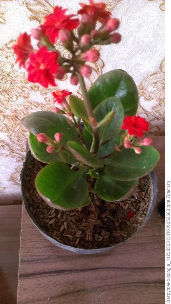 Здраствуйте, пожалуйста помогите с названиями и видами этих растений.