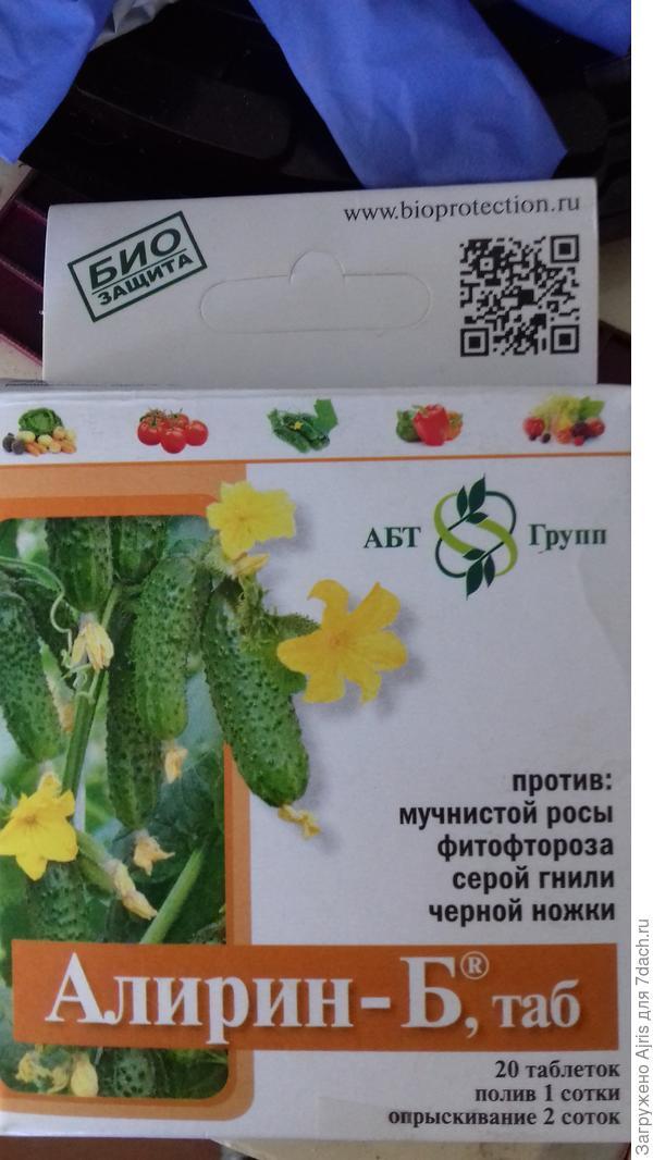 К каждой семянке обоих сортов огурцов положила по таблетке Алирина-Б