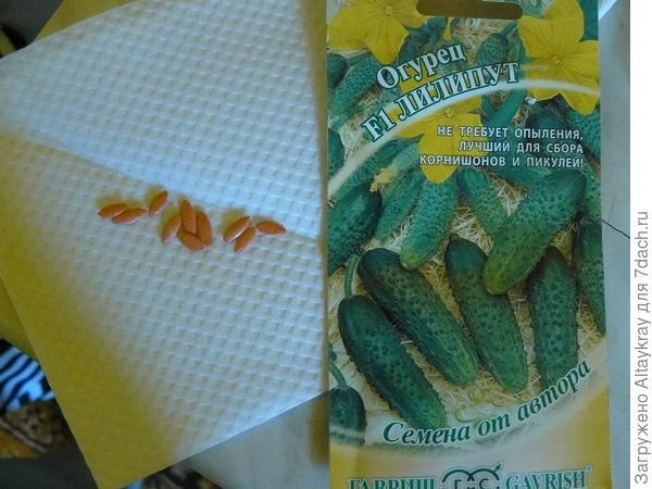 10 семян Лилипут