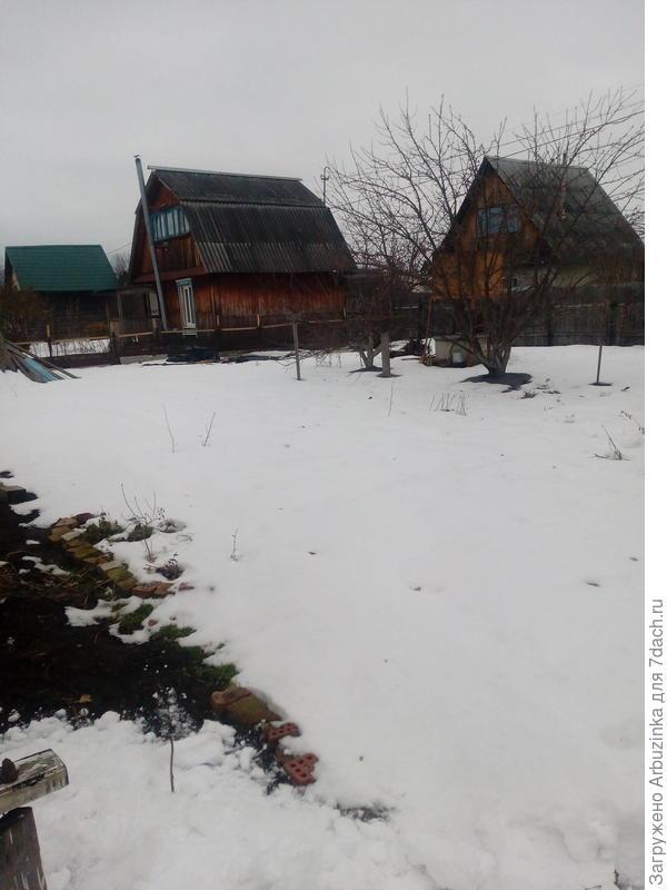 Снега в этом году совсем мало, я уже почти не надеюсь, что после морозов вновь посаженная по осени клубника модных сортов, останется жива...