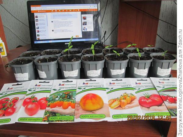 Всходы томатов по сортам на 26.022018г.