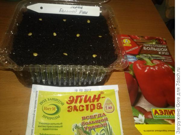 семена высаженные в грунт