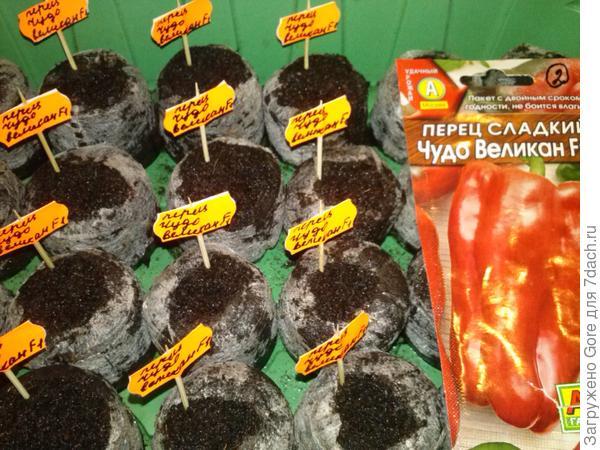 семена, высаженные в таблетки