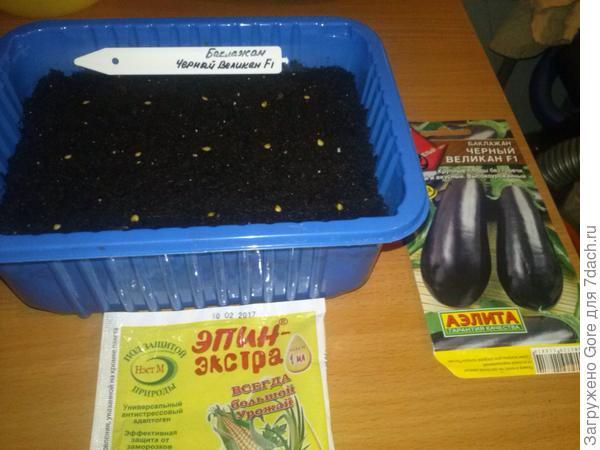 Семена, высаженные в грунт