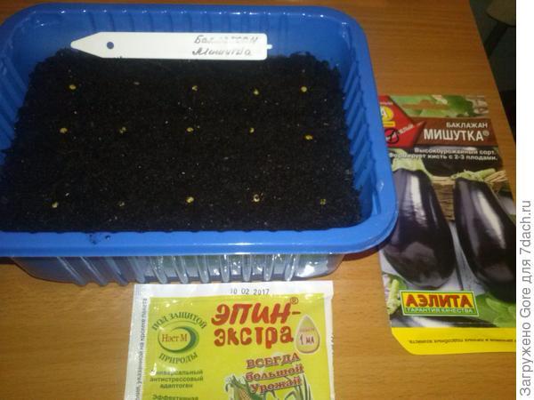 семена, посаженные в грунт