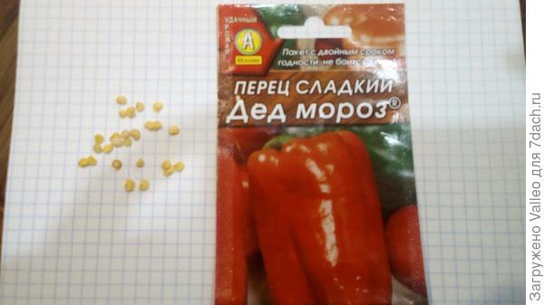 """Семена """"Дед Мороз"""""""
