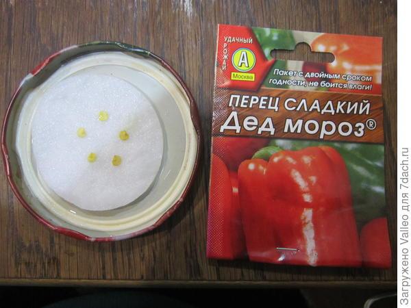 """Семена сладкого перца """"Дед Мороз"""" замоченные в растворе """"Эпина"""""""