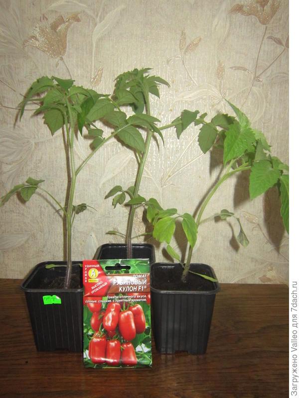Подросшие растения