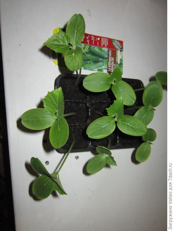 Взошли все 9 семян