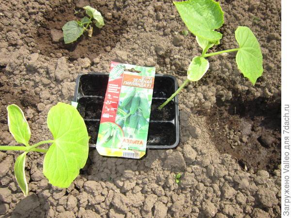 Растения готовы к пересадке