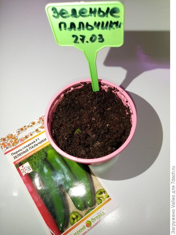 Необычный сладкий перец 'Зелёные пальчики' от ГК Русский Огород. Начало
