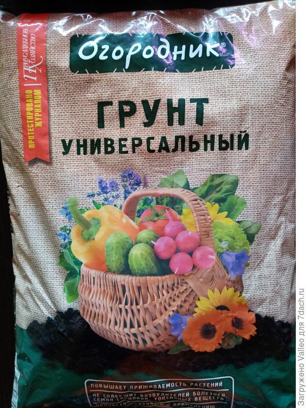 """""""Аэлиты"""" огурцы - и в салате, и в засолке хороши!"""
