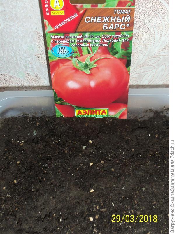 Посев семян. Второй ряд - томат Северёнок
