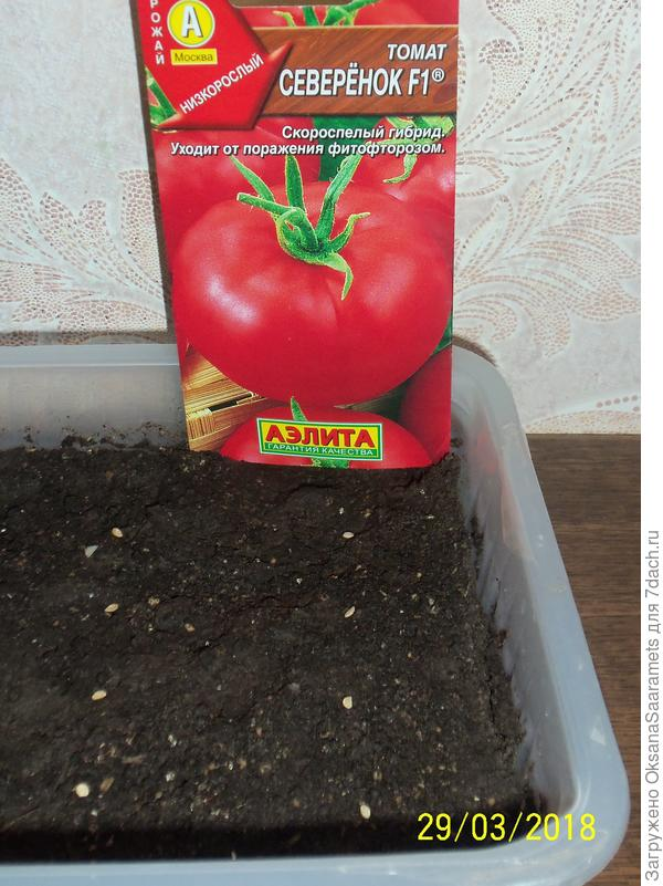 Посев семян. Третий ряд - томат Северёнок F1