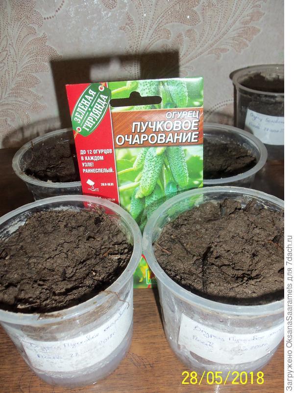 Посеянные семена